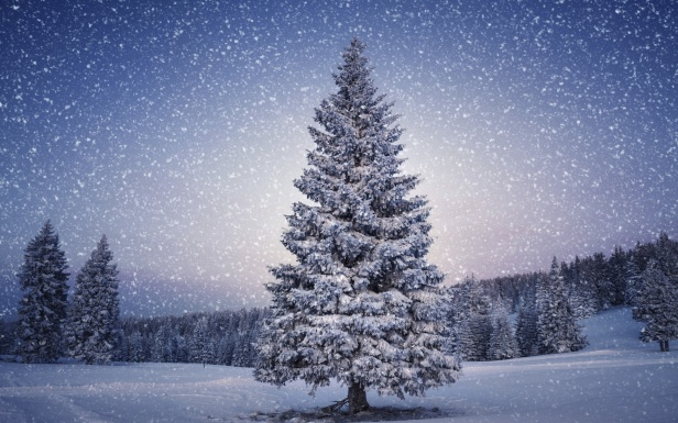 Beautiful-Christmas-Tree-Wallpapers-6.jpg