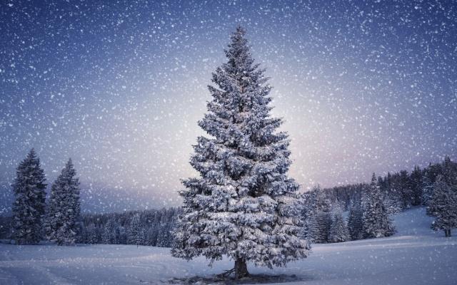 Beautiful-Christmas-Tree-Wallpapers-6.jpg